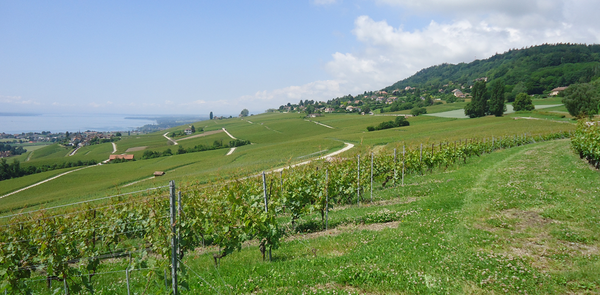 スイスの片田舎の小さなワイナリーで大切に育まれたナチュラルなワイン