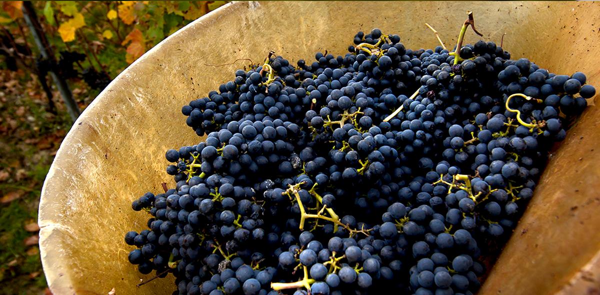 1917年から4世代・100年以上にわたり継承されているワイナリーでは、変わらぬ自然の力と現代のテクノロジーを融合することによってさらに繊細に自然素材の味を活かしたワインを実現しています。